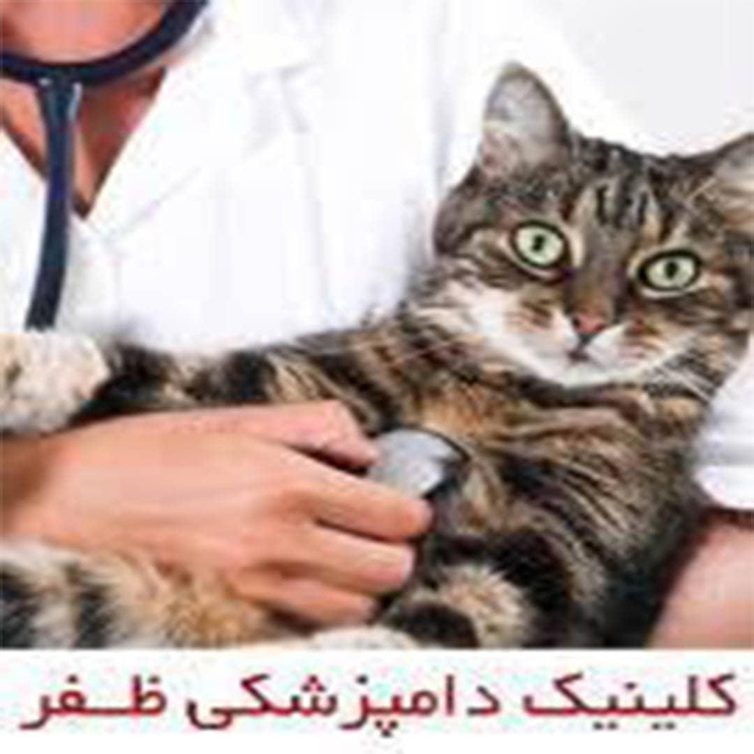 کلینیک دامپزشکی    ظفر
