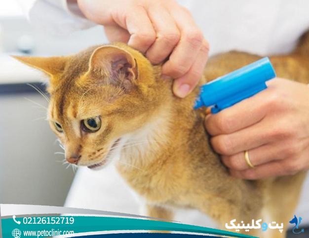 رایج ترین سوالات برای میکروچیپ در حیوانات سگ و گربه - پتوکلینیک